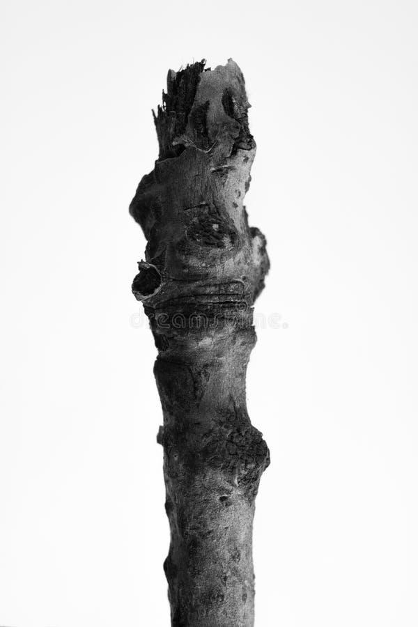 Macrophoto av växtobjekt med höga detaljer fotografering för bildbyråer