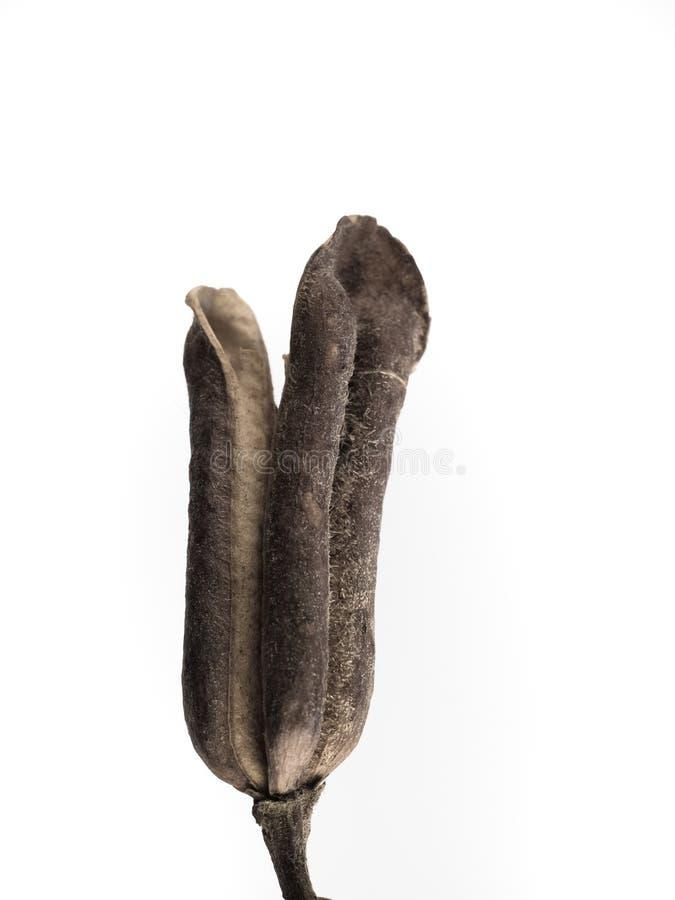 Macrophoto do objeto da planta com detalhes altos imagens de stock royalty free