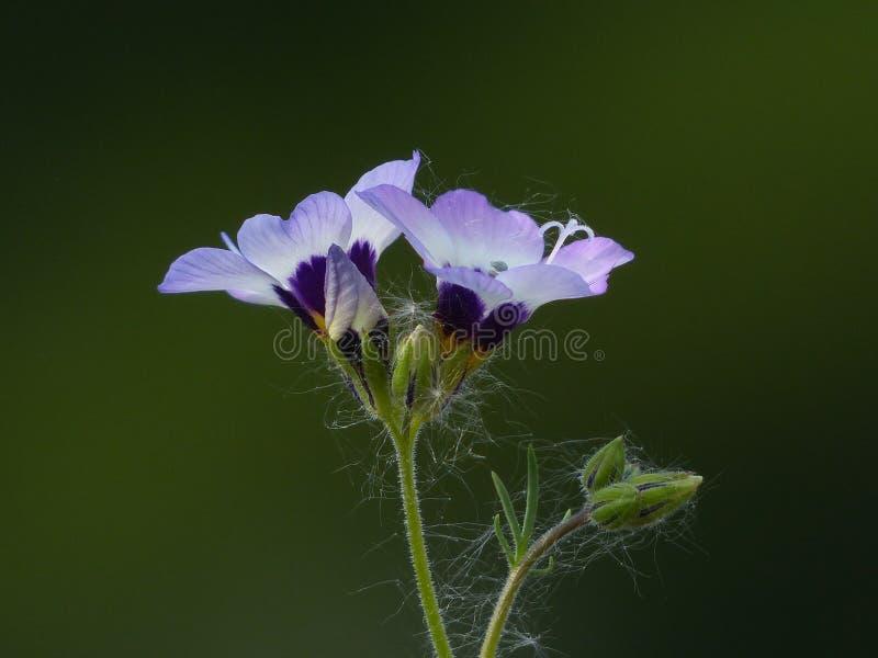 Macrophotography Of Purple Petal Flower Free Public Domain Cc0 Image