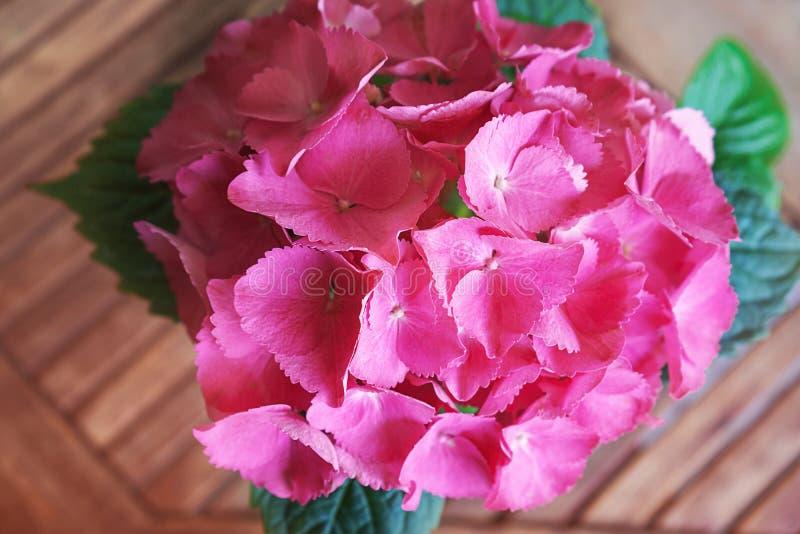Macrophylla do rosa, a lil?s, a roxa da hort?nsia da flor da hort?nsia ou flor do hortensia que florescem no fundo de madeira da  imagens de stock royalty free