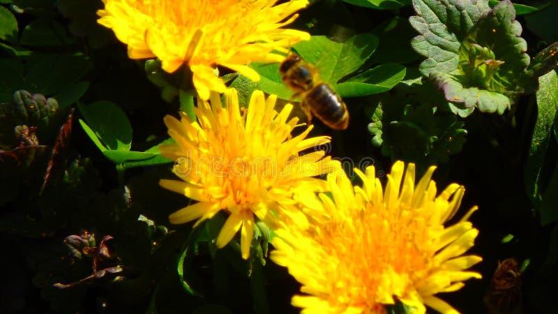 Macros en verano: tiros del jardín imagenes de archivo