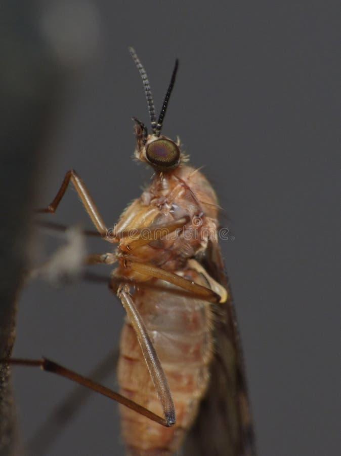 Macroschot van een vlieg op een installatie in de tuin foto genomen int. hij het UK royalty-vrije stock afbeeldingen