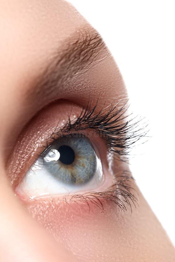 Macroschot van het mooie oog van de vrouw met uiterst lange wimpers stock afbeeldingen