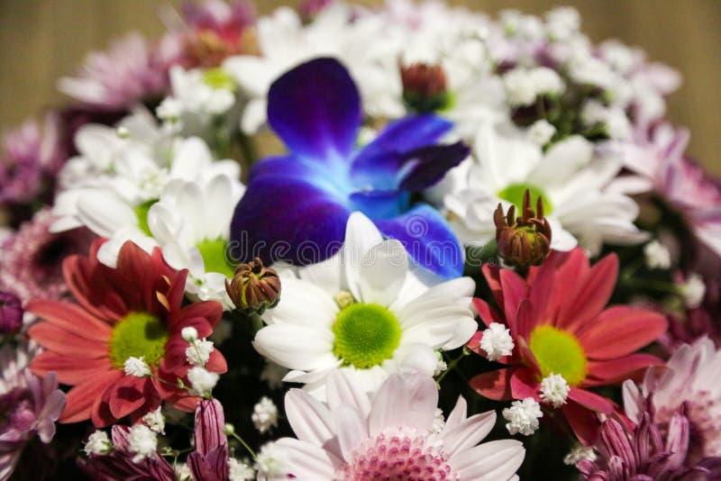 Macroshooting van een boeket van wilde bloemen stock afbeelding