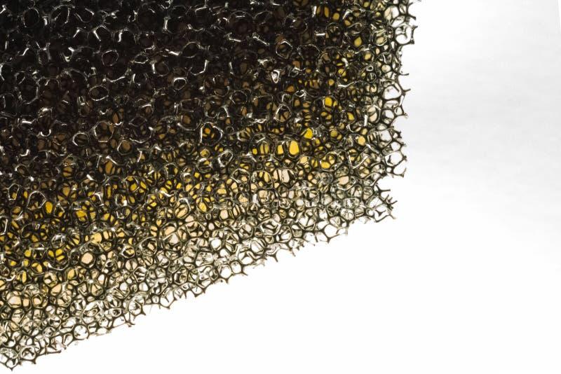 Macrospons met gaten stock afbeelding