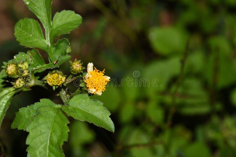 Macrospruit van bloemen die in mijn tuin, zijn close-upschot groeien royalty-vrije stock foto