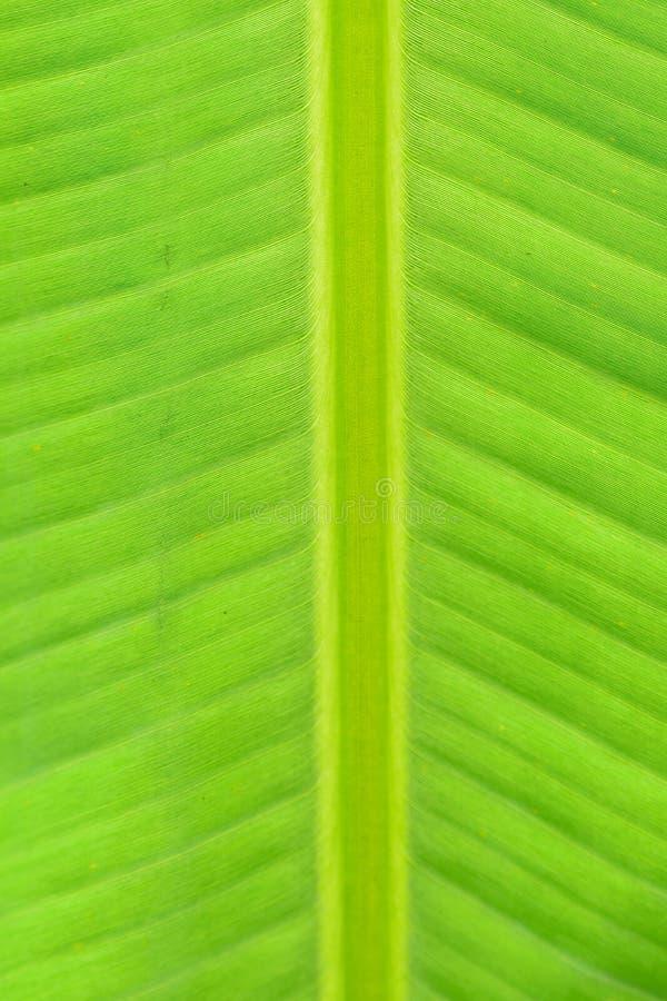 Macrotextuur van verse groene het bladdetails van de de zomerbanaan royalty-vrije stock fotografie