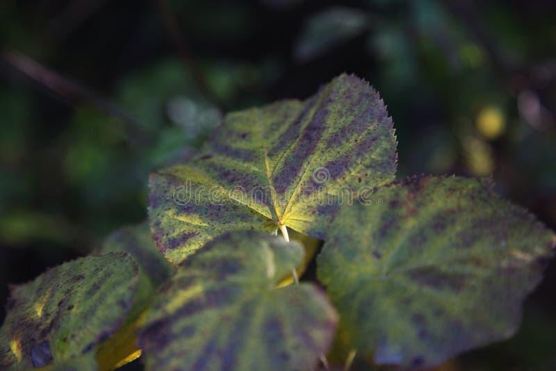 Macrowereld van bladeren royalty-vrije stock foto's