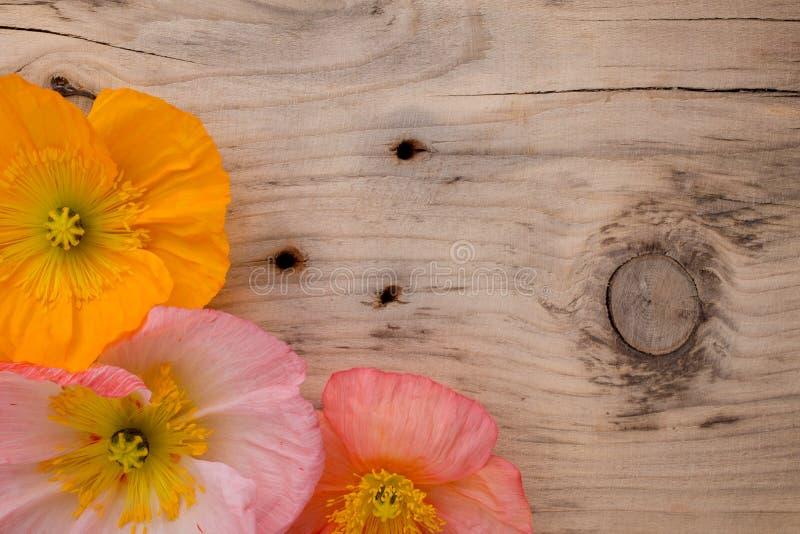 Download Maczek zdjęcie stock. Obraz złożonej z pomarańcze, zakończenie - 41951928