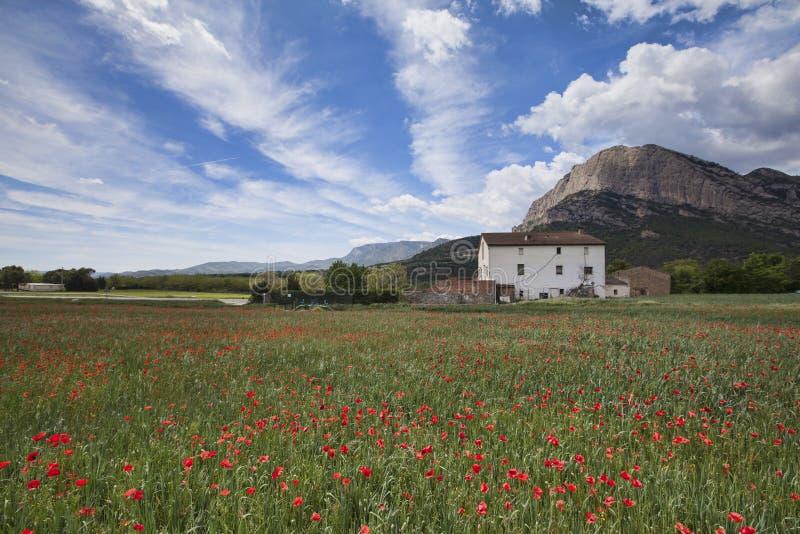 Maczka pole w Hiszpańskich Pyrenees w wiośnie fotografia stock