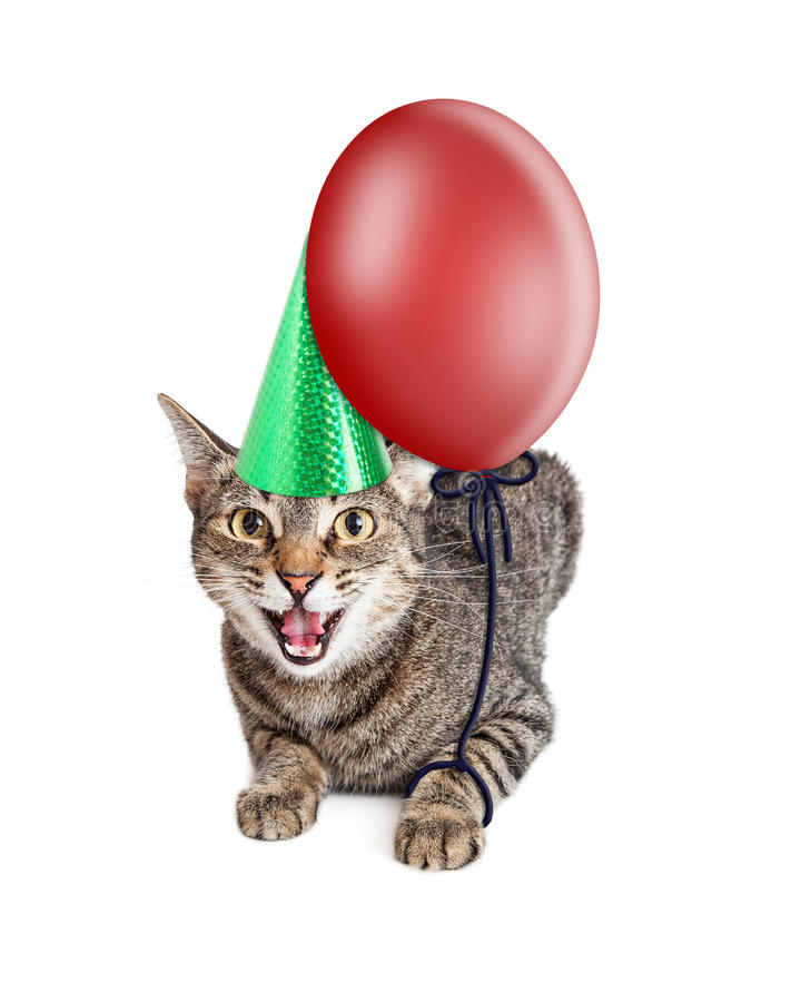Mad Birthday Cat. Angry cat wearing birthday hat with balloon stock photography