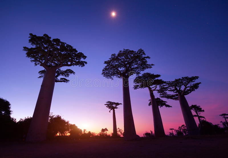 Madagascar stock photography