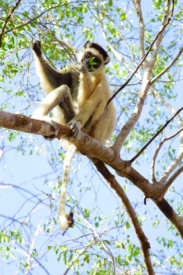 Madagascar royalty free stock photo