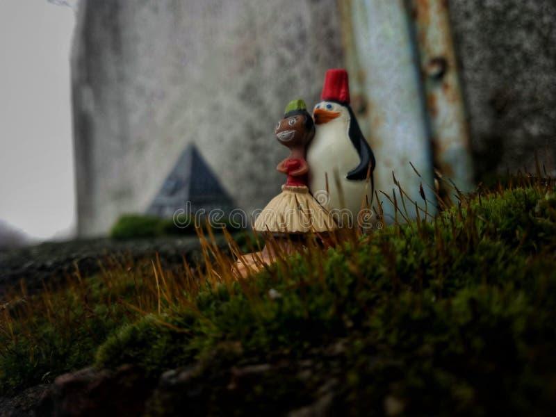 Madagascar& x27; pinguino di s immagine stock