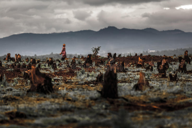 Madagascar. Stumps on the valley caused by deforestation and slash and burn type of agriculture of Madagascar stock photo