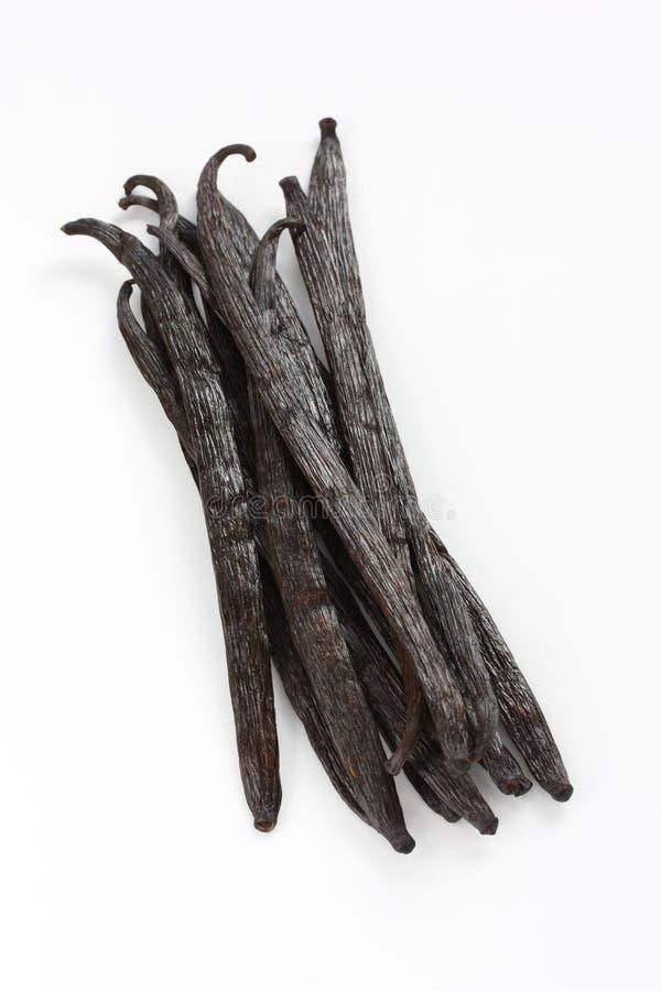 Download Madagascar vanilla beans stock photo. Image of madagascar - 21164812