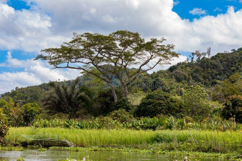 Madagaskar-Flusslandschaft lizenzfreies stockfoto