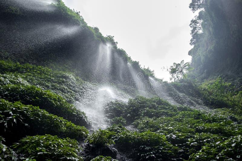 Madakaripura vattenfall East Java, IndonesiaIndonesia royaltyfria bilder