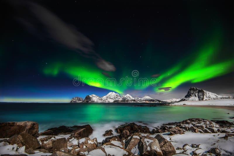 Madame Aurora de faire rage exécutant un lifgtshow étonnant sur le ciel du nord en dehors des îles de Lofoten photos stock