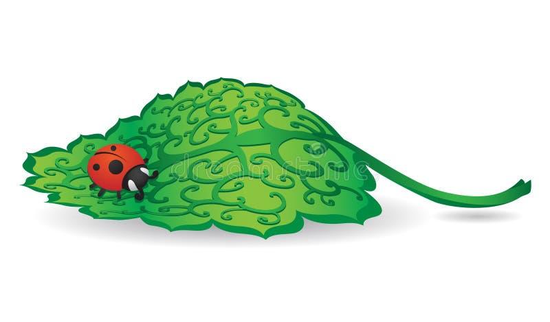 Madame Bug sur la lame verte photographie stock libre de droits