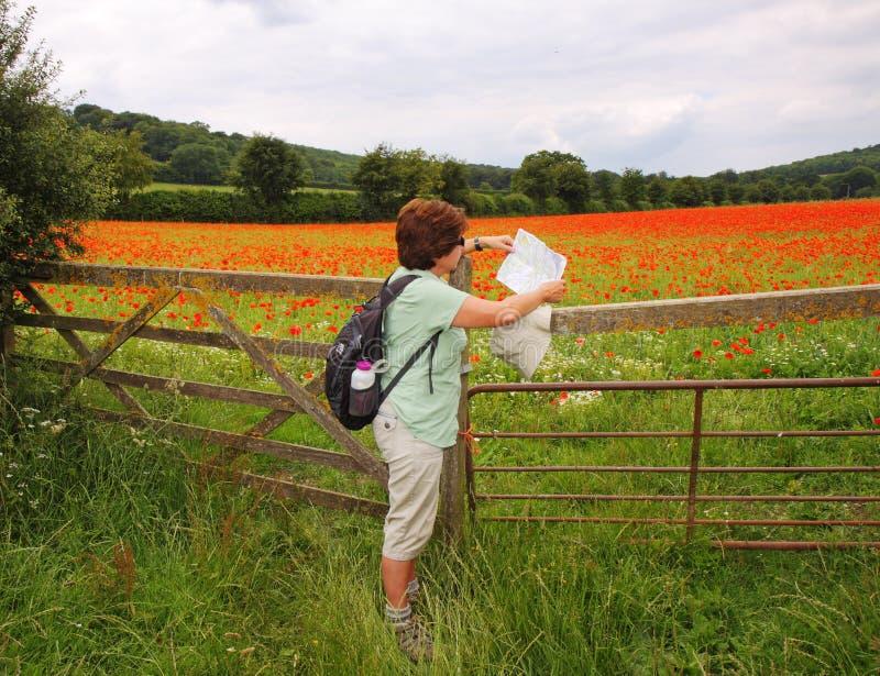 Madame Hiker affichant une carte par une zone des pavots rouges image stock