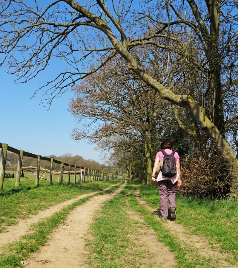 Madame Rambler sur un journal rural photographie stock libre de droits
