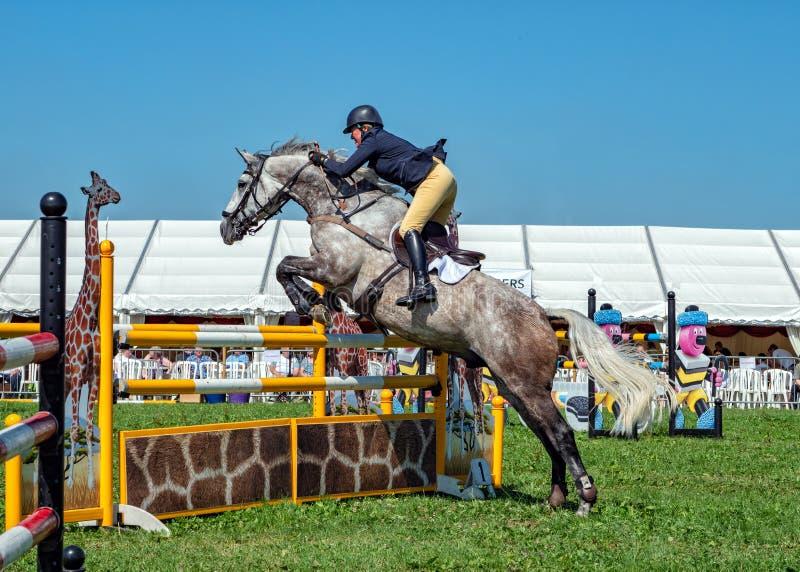 Madame sur Grey Horse Show sautant à l'exposition de campagne de Hanbury, Angleterre photo stock