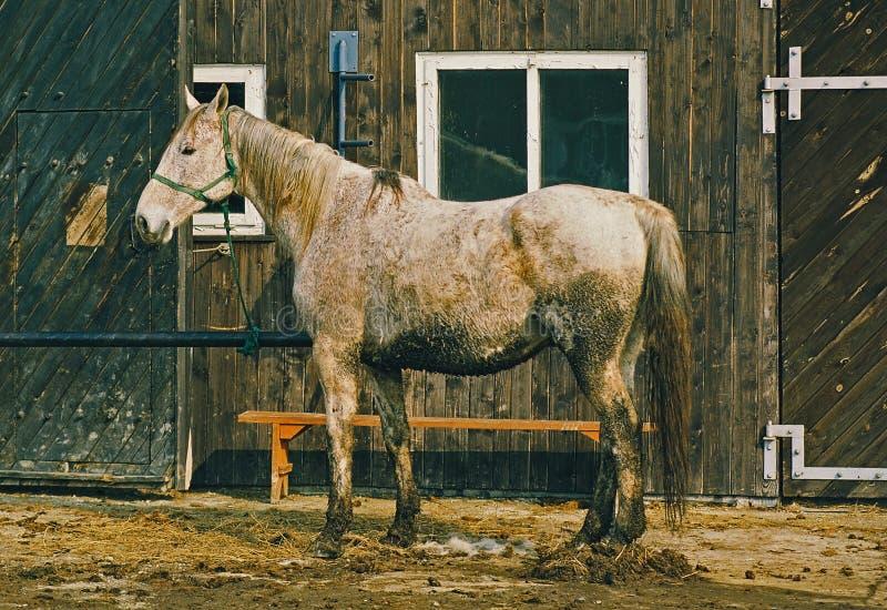 Maddy Pferd stockfoto