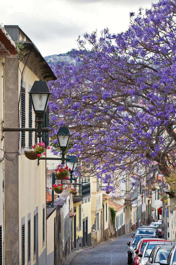 Madeira. Spring in Funchal, Madeira.Colorful tree royalty free stock photo