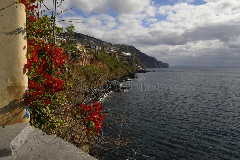 Red Flowers on terrace in Funchal on the island of Madeira. Madeira is called the island of Eternal Spring and is covered by amazing flowers of all colours. The royalty free stock photography
