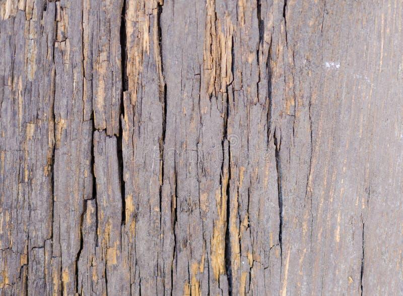 Madeira cinzenta velha com textura das quebras fotografia de stock
