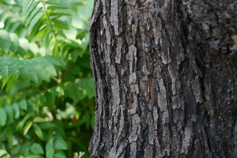 Madeira da árvore fotografia de stock