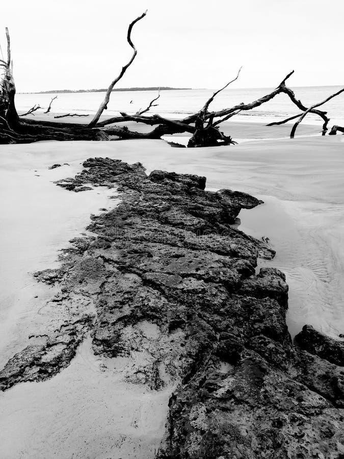 Madeira da areia da rocha fotos de stock royalty free
