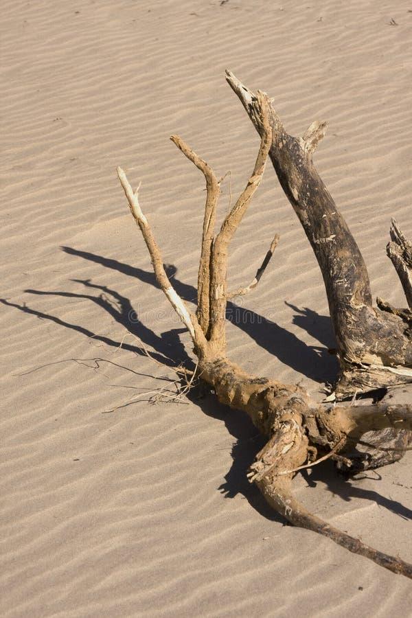 Madeira da tração na praia na luz do sol imagens de stock royalty free
