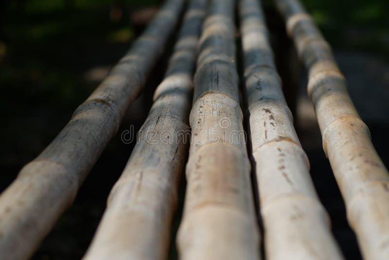Madeira de bambu fotos de stock royalty free