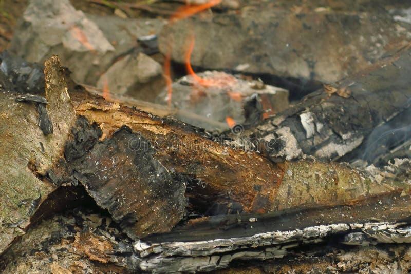 Madeira de queimadura no fogo, divorciado por turistas imagem de stock royalty free