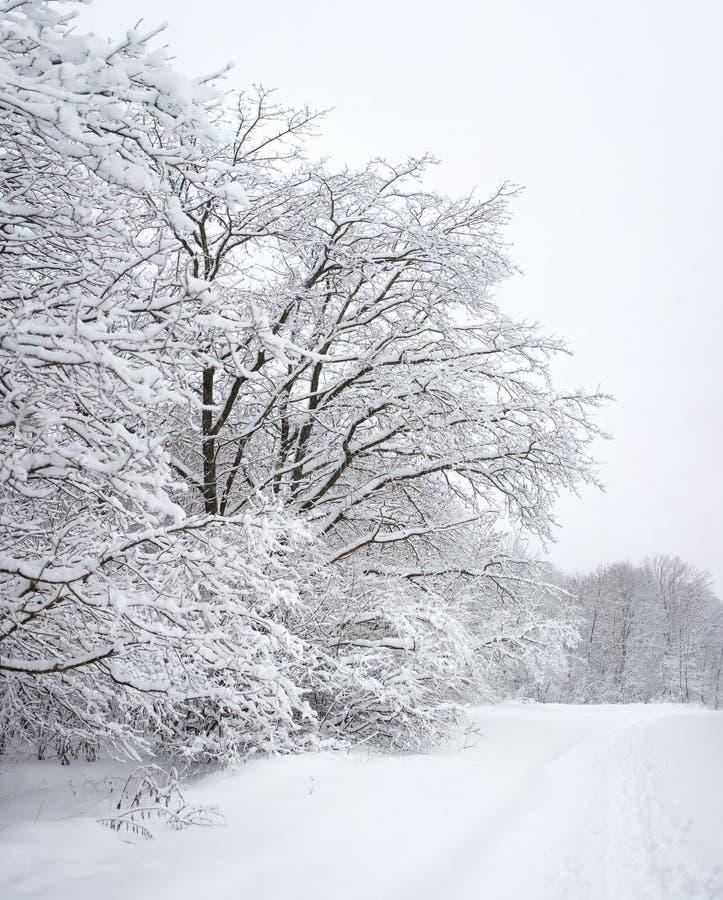 Download Madeira do inverno foto de stock. Imagem de tranquil - 12810604