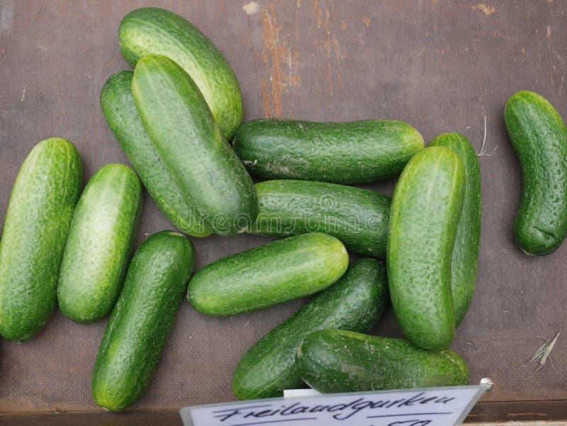 Madeira do pepino fotografia de stock royalty free