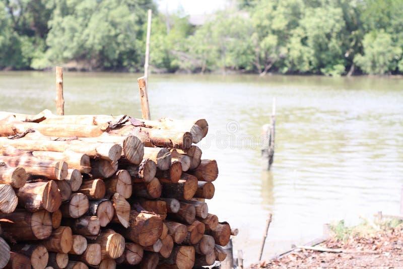 Madeira dos manguezais para o carvão vegetal imagem de stock royalty free