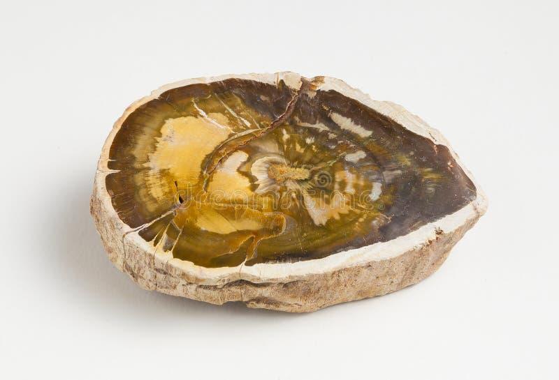 Madeira fóssil minério lustrado no fundo branco fotografia de stock royalty free