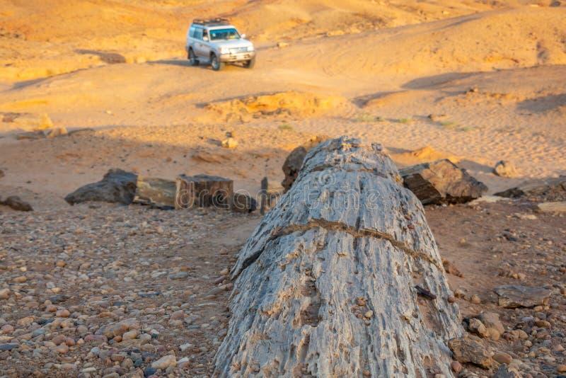 Madeira fóssil no deserto sudanês dos seixos com um veículo fora de estrada no fundo, África fotos de stock royalty free