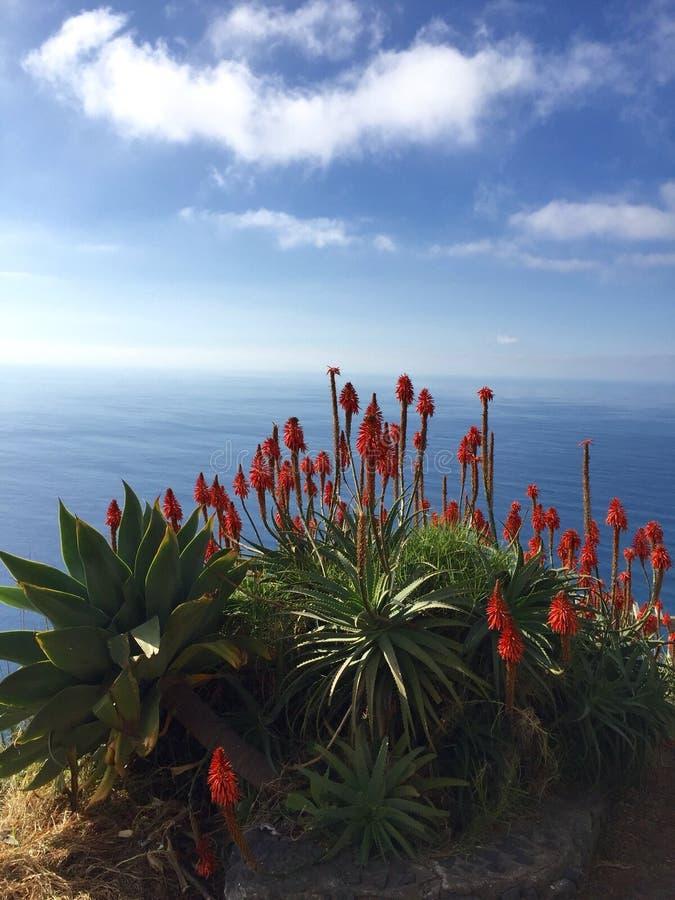 Madeira Flow royalty free stock photo