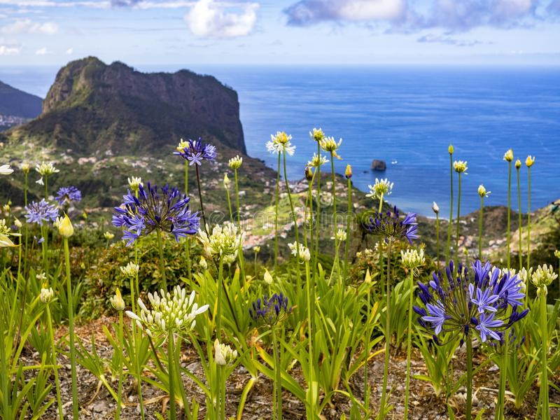 Madeira flowers. In the Northern Coast royalty free stock image
