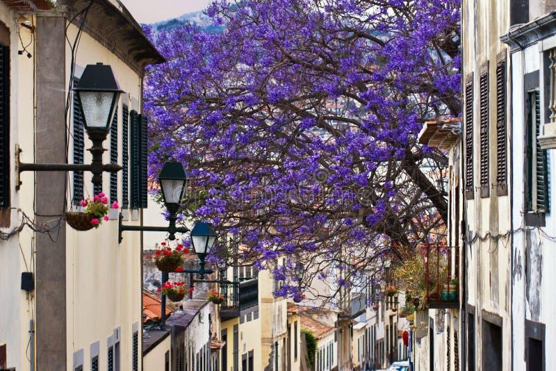 Madeira Funchal stockbilder