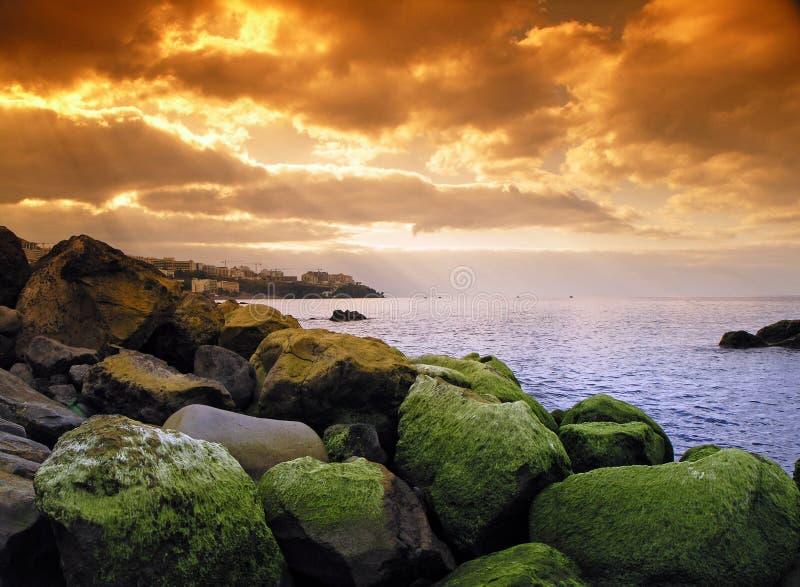 Madeira-grüne Meerespflanze. lizenzfreie stockfotografie