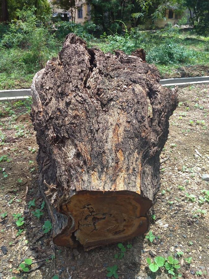 Madeira grande da árvore ao lado da estrada fotografia de stock royalty free