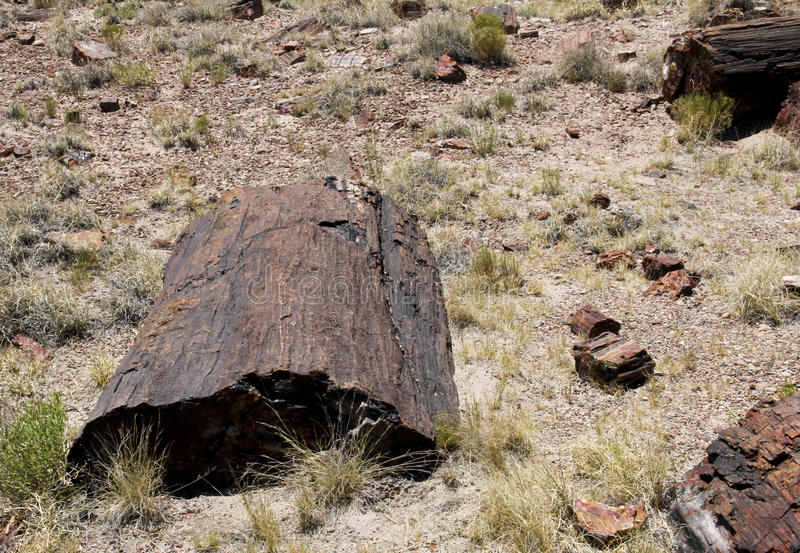 Madeira hirto de medo na paisagem do Arizona imagens de stock royalty free