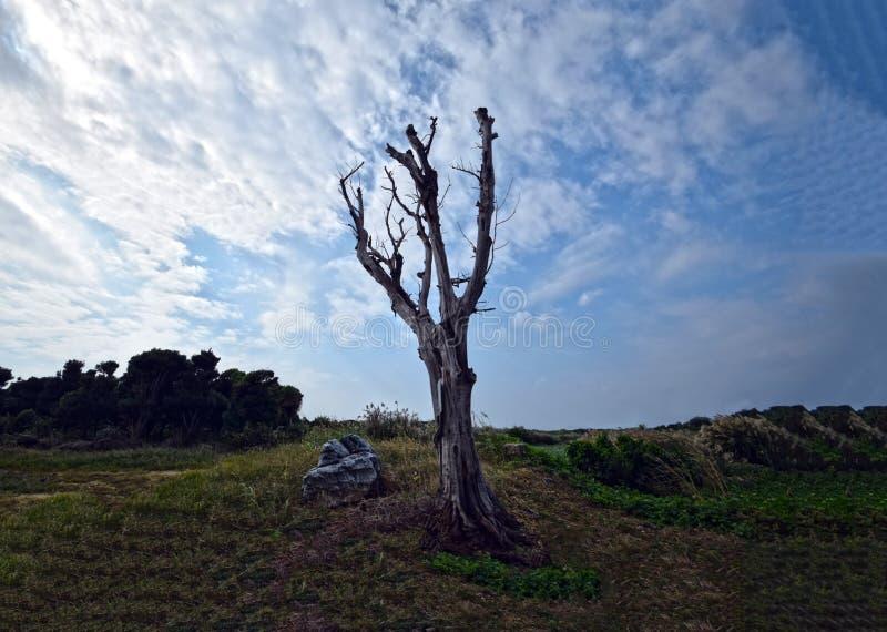 Madeira inoperante do ` s de Okinawa pela praia imagens de stock royalty free