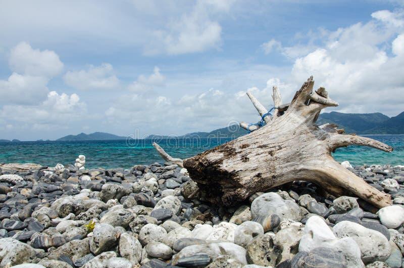 Madeira inoperante na praia de pedra imagem de stock
