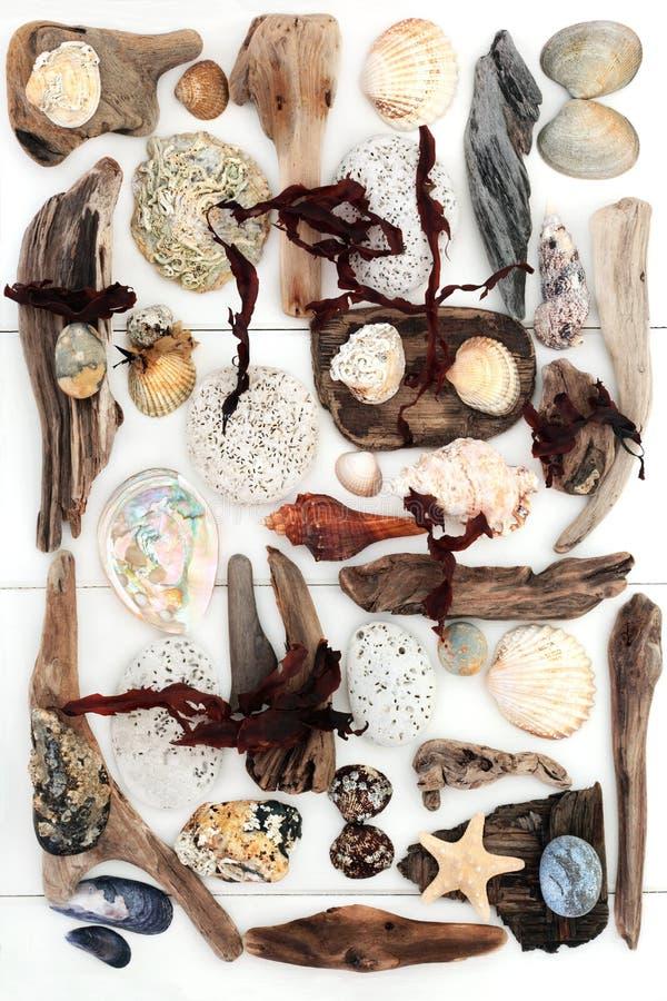 A madeira lançada à costa balança o sumário da alga e da concha do mar imagens de stock